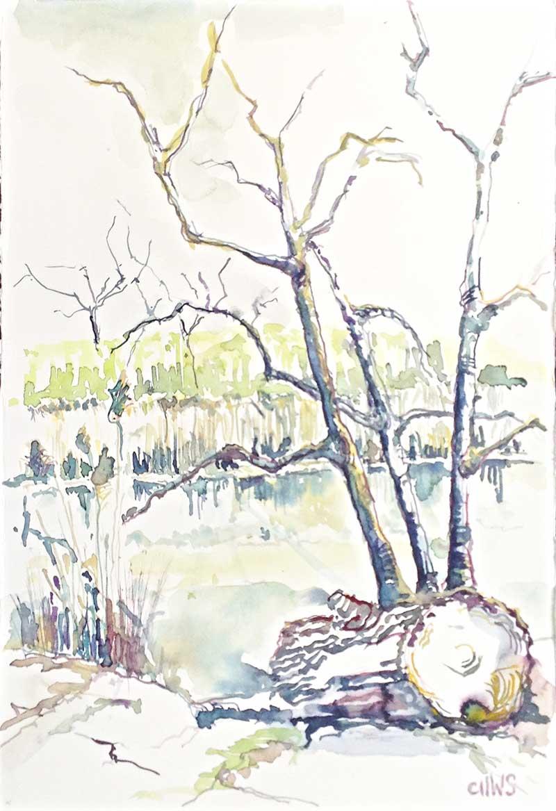 Gefällter Baum an der alten Donau