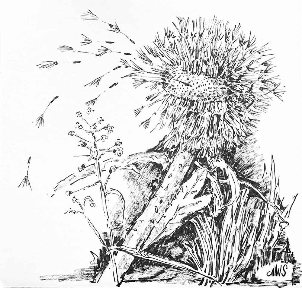 Wiesenstück mit Löwenzahn