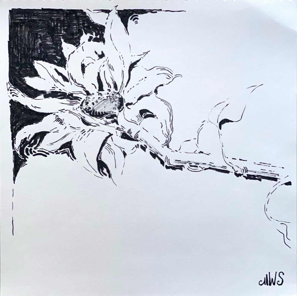 Sonneblume, liegend
